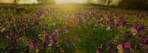 Testimonials for Sunrise Webworks
